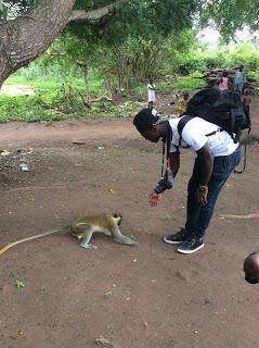 Les singes sacrés de Bondoukou