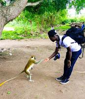 Les singes sacrés à Bondoukou en Côte d'Ivoire