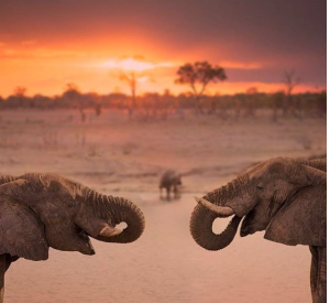 Compte Insta sur l'Afrique