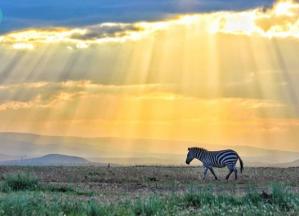 Compte Insta pour visiter l'Afrique